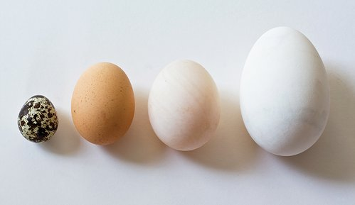 Poultry-eggs-guide-featured