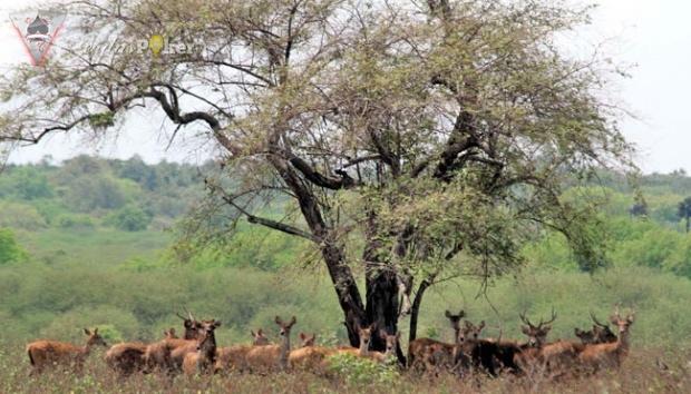 Trik Berburu Panorama Afrika di TN Baluran Bayuwangi