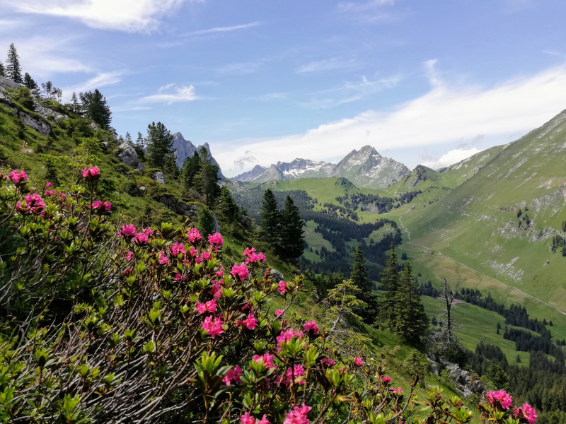 Other flowers and valley