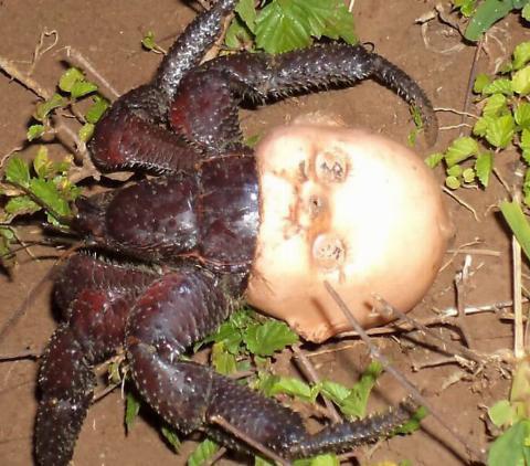 scary-head-crab-101642-65548.jpg