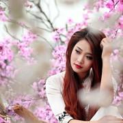 Neobychnyj-dar-cvetushhie-vetk-sakur-poluchil-Jermitazh-ot-Japonii-1-670x381