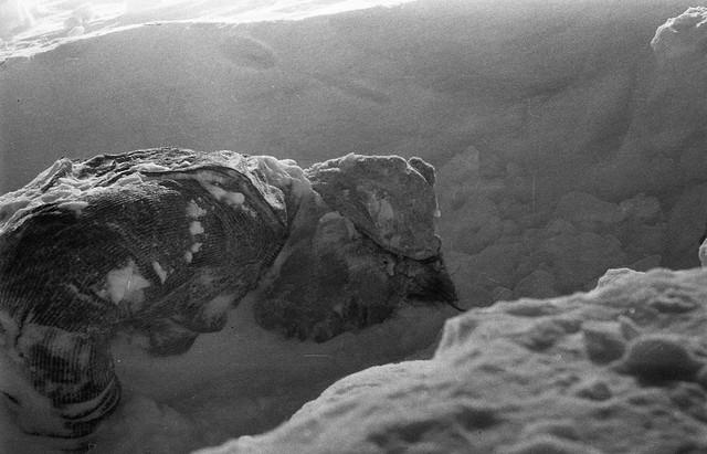 Dyatlov-pass-1959-search-429