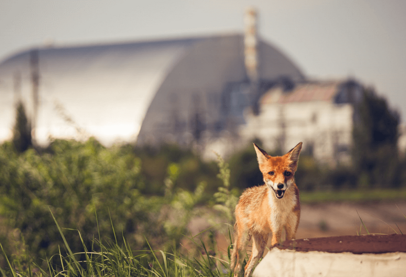 экскурсии в Чернобыль