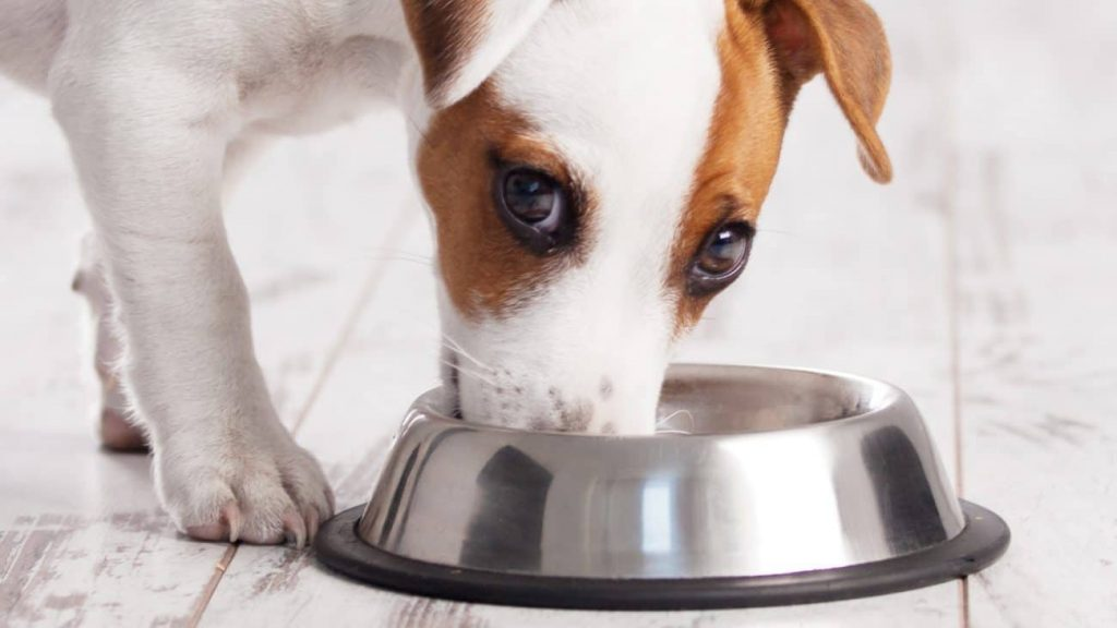 Salmon Oil for Dogs: Which is the Best of 2021?