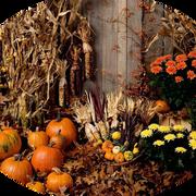paysage-halloween-0.png