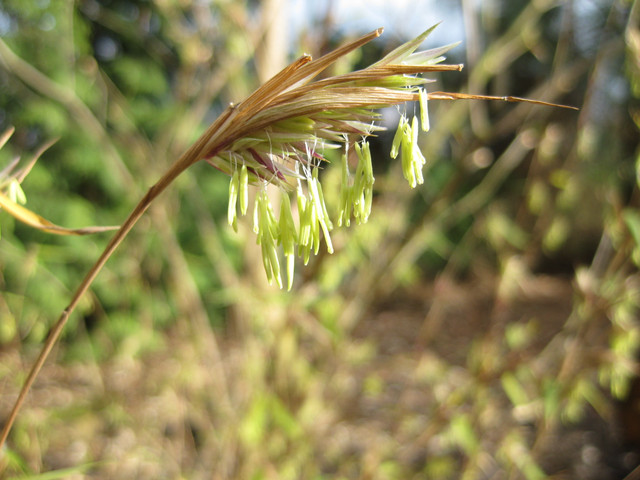 Pflanzenbilder-1-096