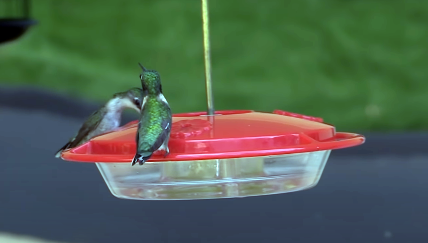 Different Ways to Attract the Hummingbirds