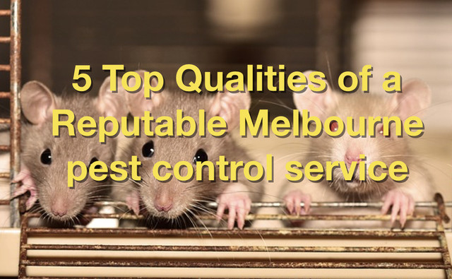 5 Top Qualities of a Reputable Melbourne pest control service