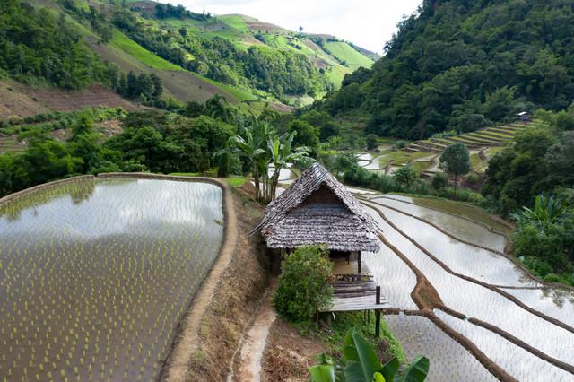 Chiangmai-ban-pa-bong-piang