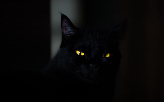 cat-eyes-black-124134-3840x2400