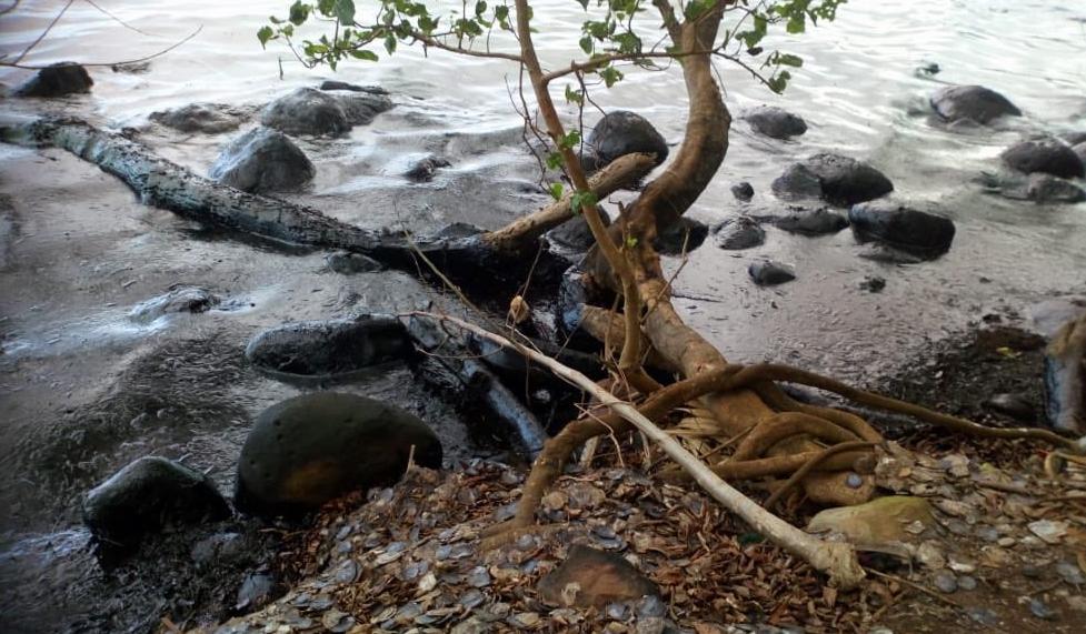Emergenza Marea Nera alle Mauritius, paradiso dei turisti.