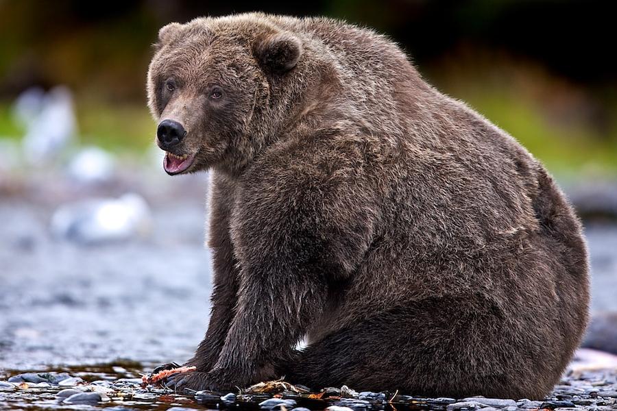 37 фотографий животных, которые вызывают улыбку - 4