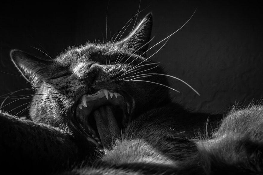 Таинственная кошачья жизнь в чёрно-белых фотографиях-22