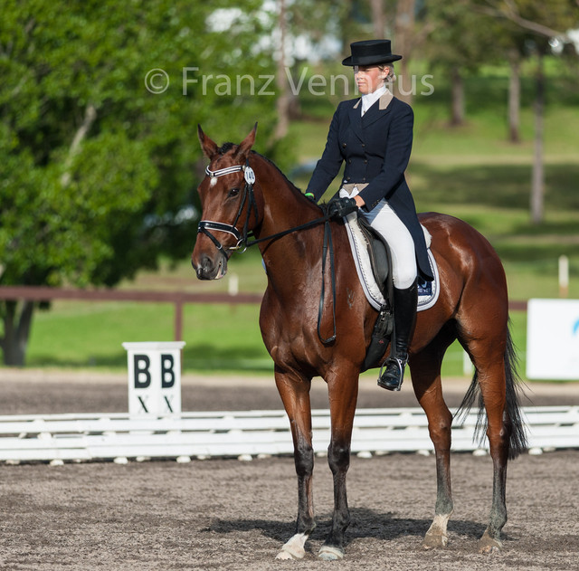 Isabel-English-riding-GRAND-ANDI-in-the-CCI3-Dressage-test-at-the-2015-Sydney-International-Horse-Tr