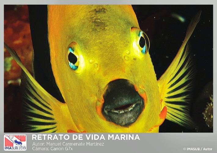 IMAGEN-PARA-WEB-Retrato-de-Vida-Marina-1