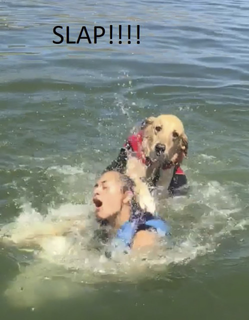 dog-drowning-sister-funny-post-holly-monson-5b1e37d03d39d-png-700