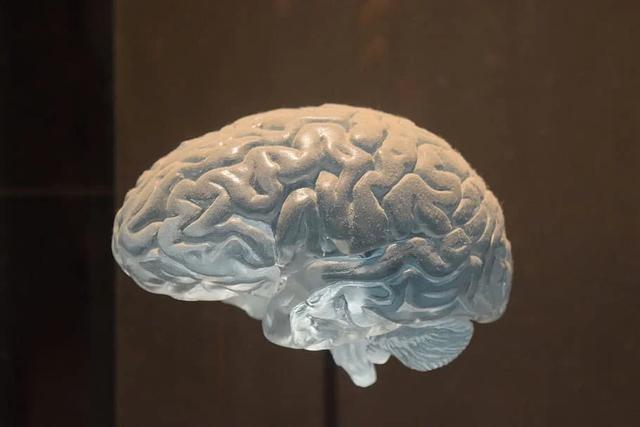 извилины мозга человека