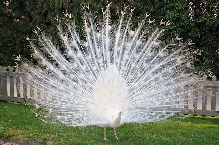 Природа - лучший художник: 40 животных неожиданной расцветки - 6
