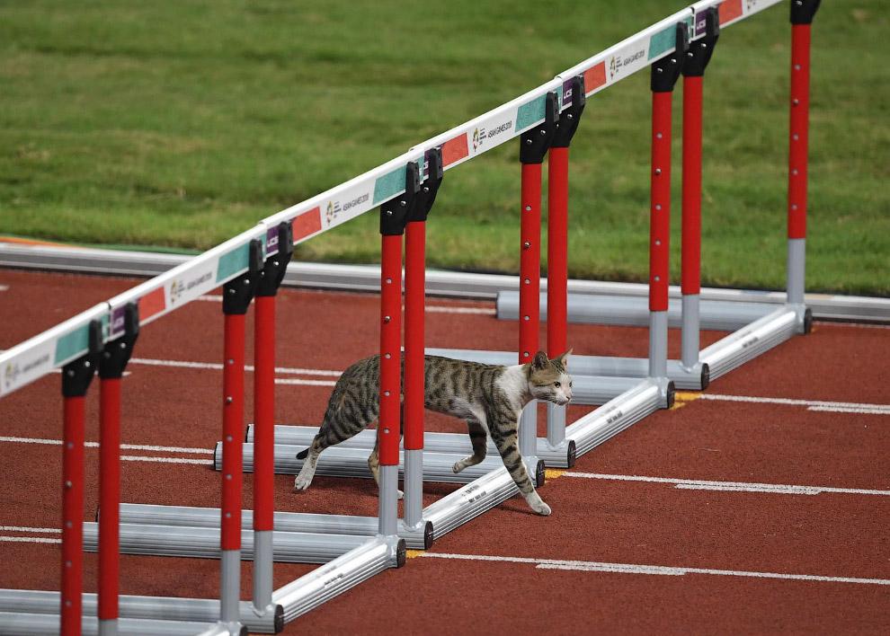 Курьезные случаи отличившихся на спортивных мероприятиях животных