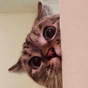https://i.ibb.co/wd6KWVF/6-Nala-Cat.jpg