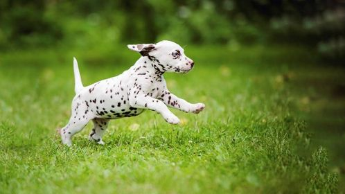 4 Impressive Exercises To Teach Your Dog