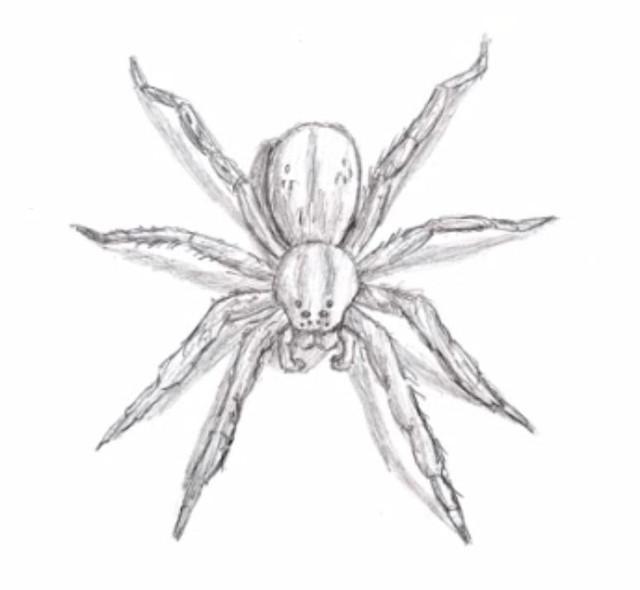kak-nauchitsya-risovat-pauka-prostym-karandashom-pojetapno-7