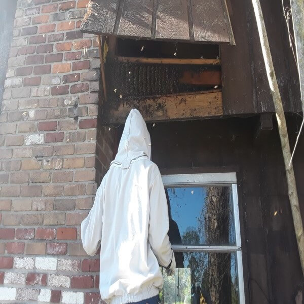bee hive removal process.