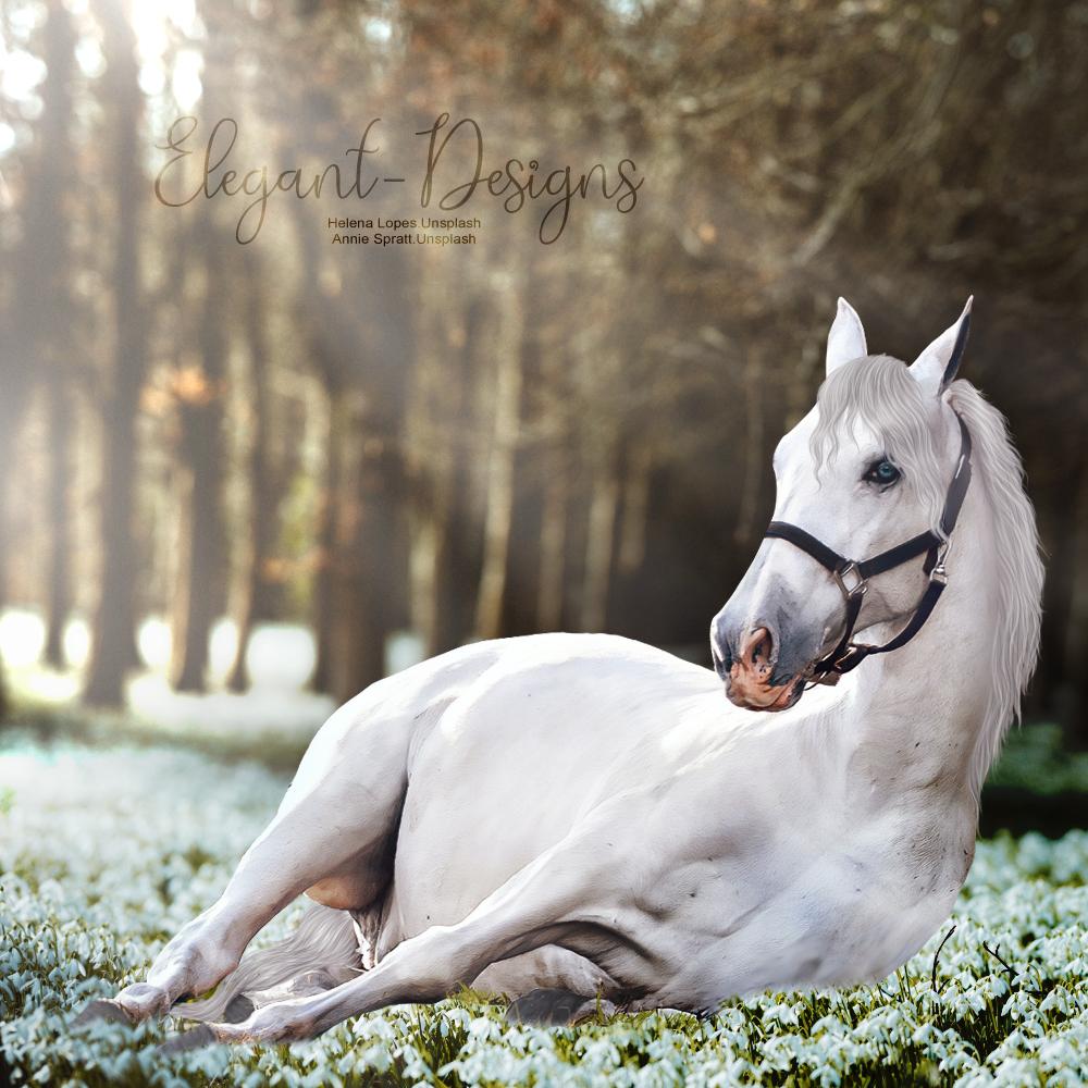 White-Horse-in-Flower-Patch.jpg