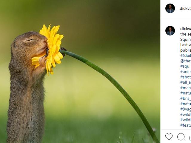 Lo scoiattolo che annusa i fiori Scoiattolo-annusa-fiore-k-HYB-U3140547002563rz-F-656x492-Corriere-Web-Sezioni