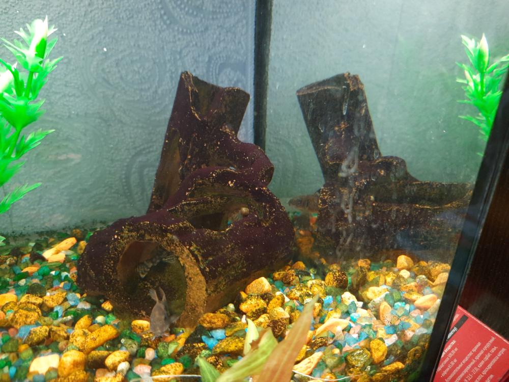 Aquarium-4.png