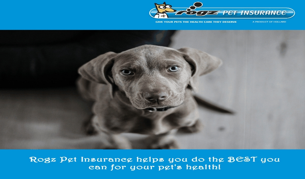 Andrews Kurth's Alternative Pet Insurance