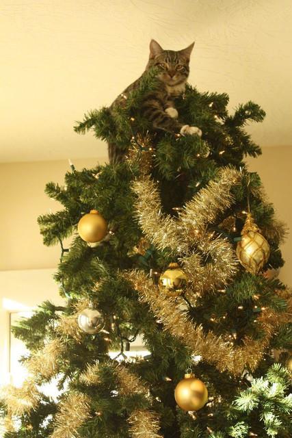 聖誕樹長貓系列,不會長出貓咪的聖誕樹不是一棵好聖誕樹 4