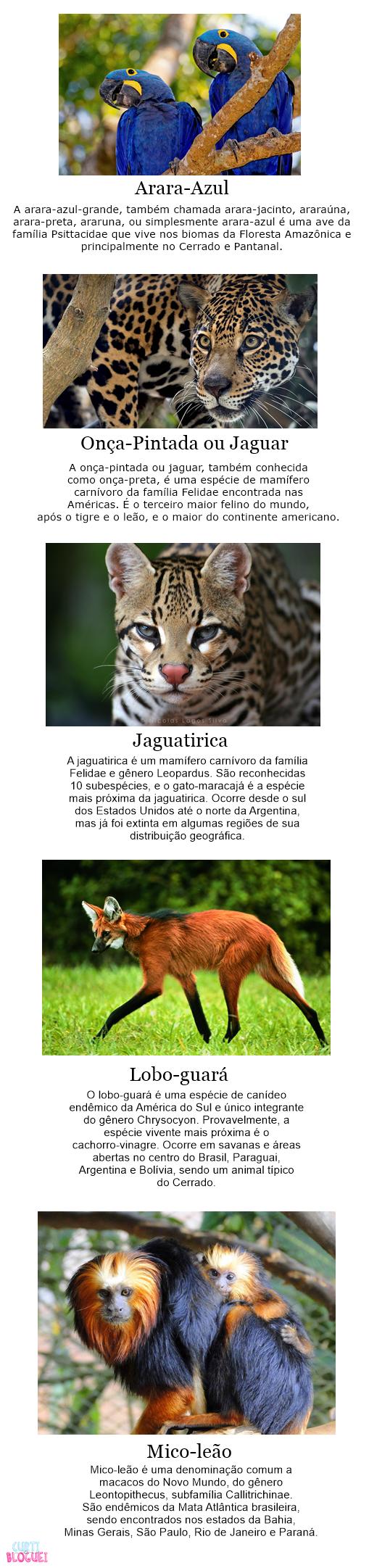 5-especies-de-animais-que-so-encontramos-na-America-do-Sul