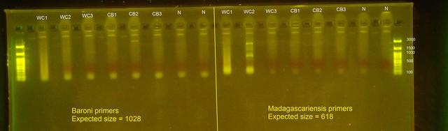 Genetictest-Mantella-First