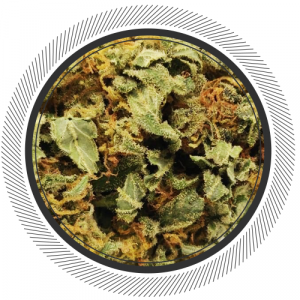 You can also check the weed edibles which will be good for your body, but it is important to choose the right thing. If you are worried about its price or the way of using it, then you can choose the item.Visit https://getwhitepalm.co/product-category/edibles/