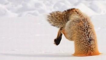 Firefox-Crash-348x196