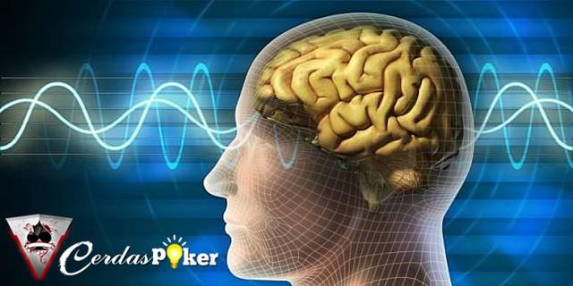 """Riset Temukan """"Mesin Kesadaran"""" di Dalam Otak Monyet"""