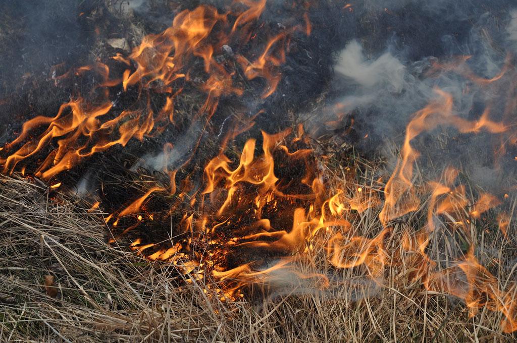 https://i.ibb.co/x6sBbFd/fire-fire-fire-by-ale-via-flickr.jpg
