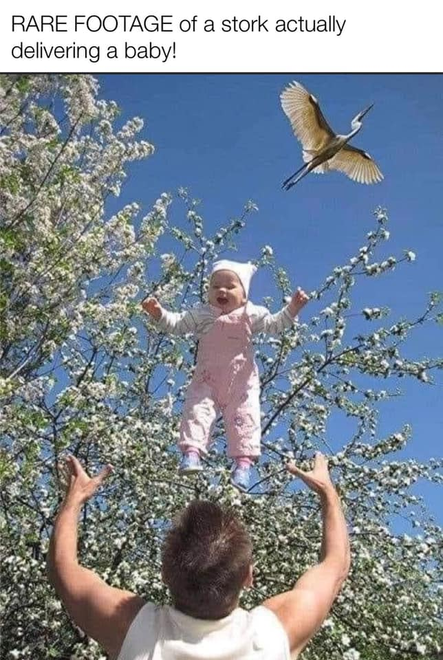 mm-stork-delivering-a-baby.jpg