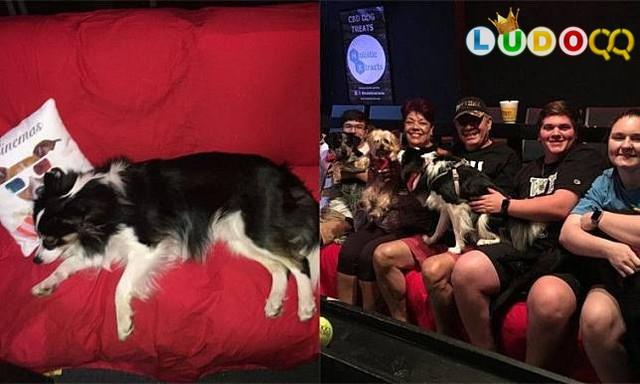 Satu-Satunya Bioskop Yang Memperbolehkan Anjing Masuk