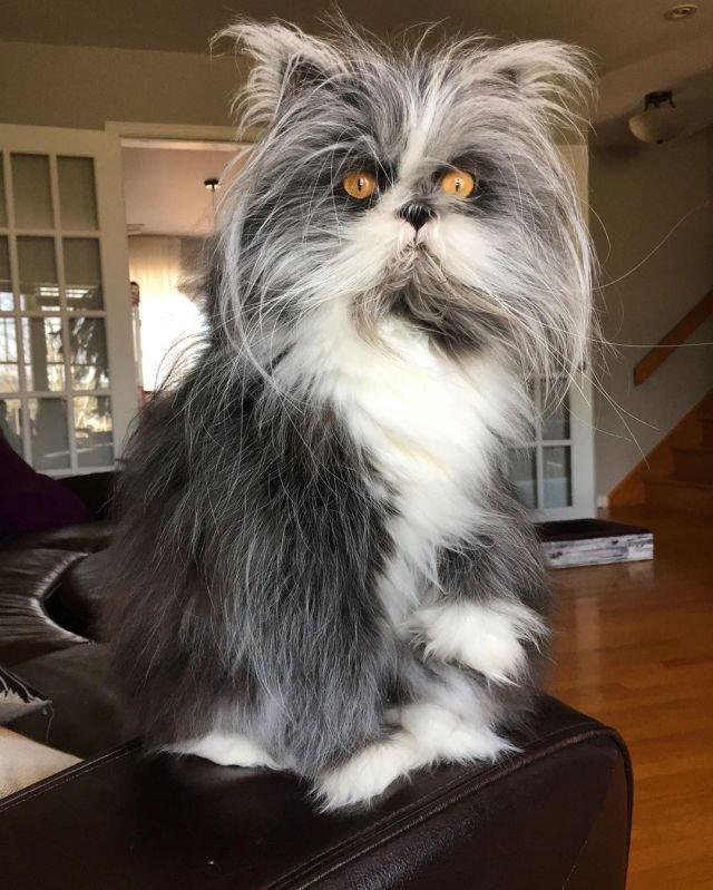 То ли кот... то ли пес...