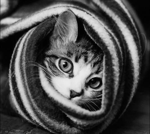 cat-scarf.jpg