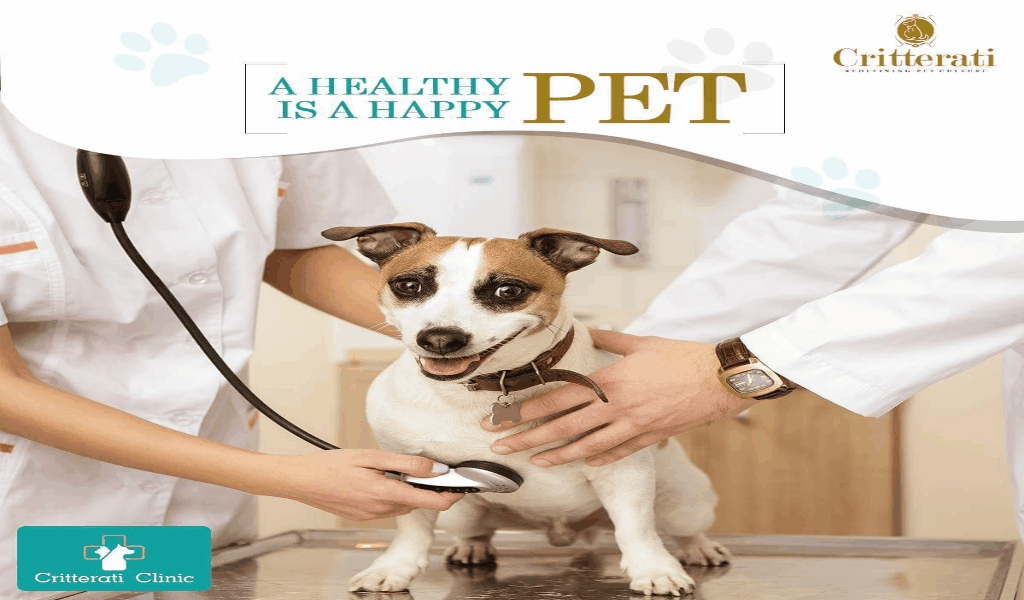 Andrews Kurth's Pet Health