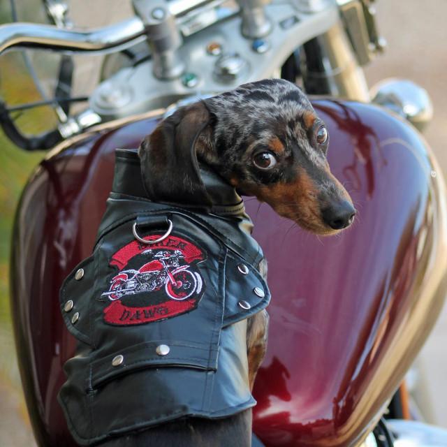 biker-dawg-motorcycle-dog-jacket-black-5490-49064-1493758886-1280-1280