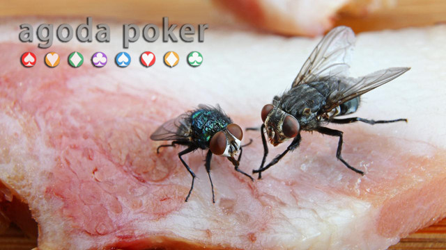 7 Cara Mencegah Lalat Hinggap di Makanan Secara Alami