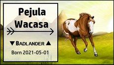 Pejula_Wacasa.jpg
