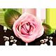 https://i.ibb.co/xgBNZxP/rose-icon.png