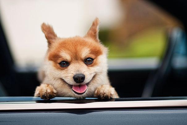 30 фотографий самых счастливых животных на планете-21