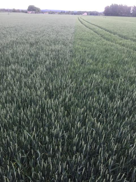 Suivi des blés 2020 - Page 5 9-A743-DBE-0-BA0-489-B-A3-B5-6119-C2235533