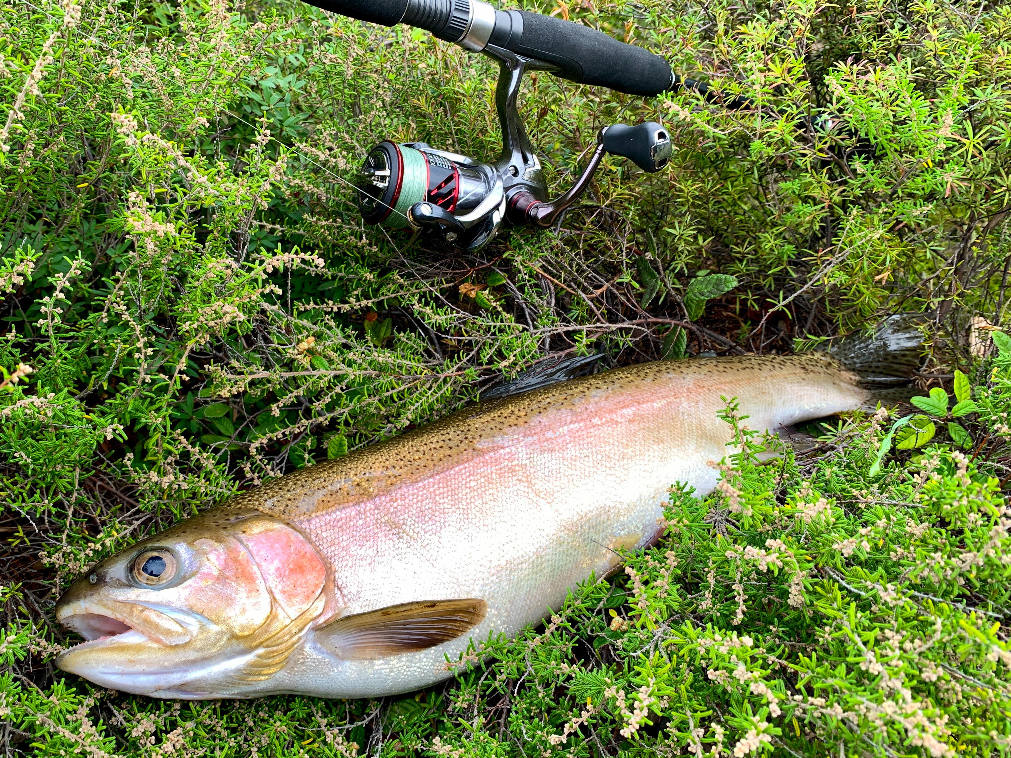 Fishing-Trout1.jpg